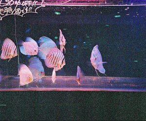 fish, vintage, and grunge image