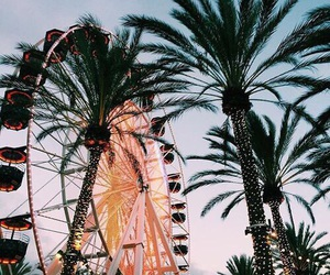 summer, palm trees, and fun image