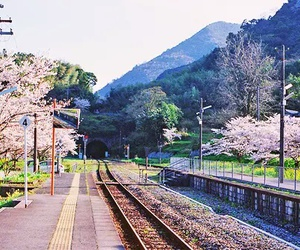japan, sakura, and nature image