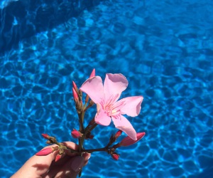 flower, pool, and summer image