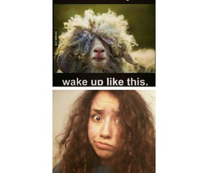 curly hair problems image