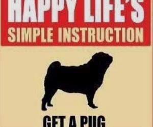 fun, pug, and words image