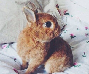 cute, animal, and rabbit image