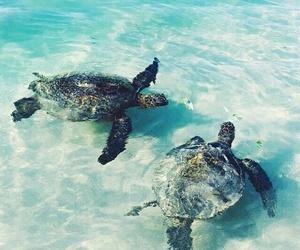 animals, beach, and summer image