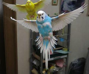 animal, cute, and bird image