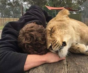 boy, animal, and lion image