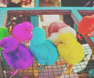 animals, colors, and bright pastel image