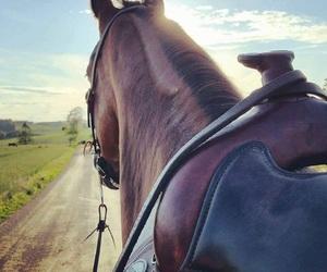 amazing, riding, and sunshine image