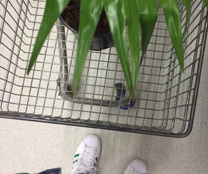 plants, grunge, and aesthetic image