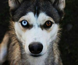 dog, eyes, and animal image
