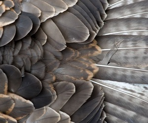 feather, bird, and theme image