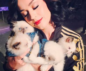katy perry and cat image