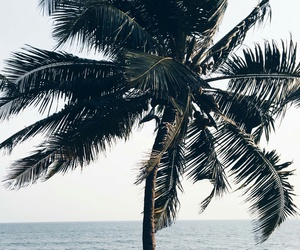 beach, outdoors, and palm tree image