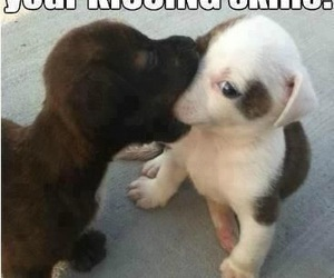 funny and kissing image