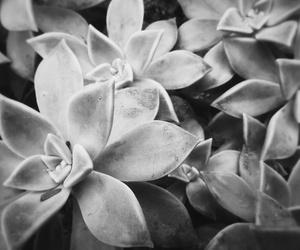 flower b&w image