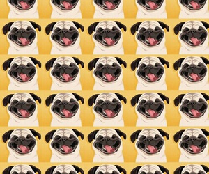 wallpaper, background, and dog image