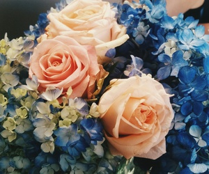 flowers, hydrangeas, and roses image