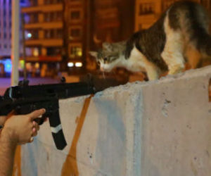 cat, police, and coup image