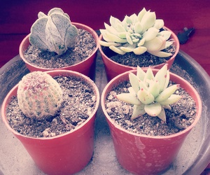 cactus, cute, and love image