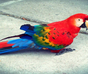 animal, bird, and parrot image