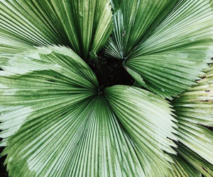 green, plants, and indie image