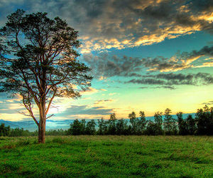 tree, nature, and photography image