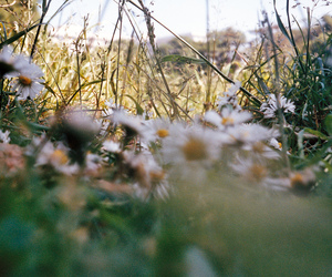 35mm, flowers, and green image