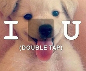 adorable, puppy, and dog image