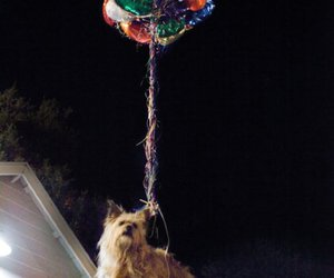 dog, party, and project x image