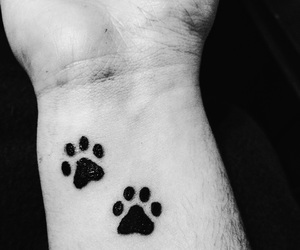 arm, cat, and tattoo image