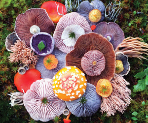 mushroom, nature, and aesthetic image