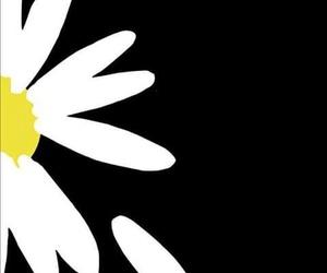 flor and fondo image