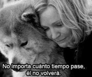 hachiko, dog, and frases image