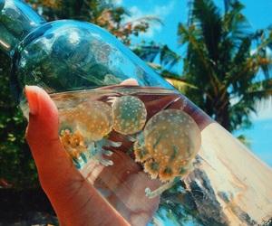 summer, beach, and jellyfish image