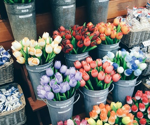 colorful, market, and tulip image