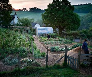 nature, vegetables, and garden plot image