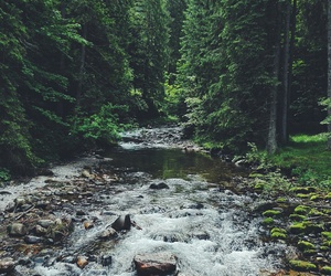 beautiful, mountains, and forest image