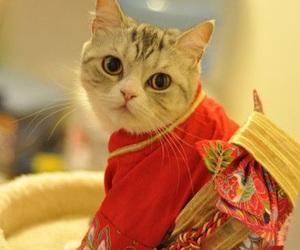 cat, cute, and japan image