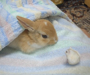 bunny, hamster, and rabbit image