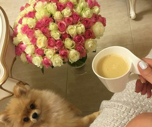 pomeranian and roses image