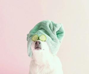 cucumber, dog, and animal image