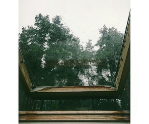 forest, rain, and window image