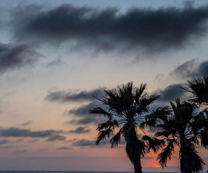 palms and sky image