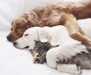 animal, cat, and puppy image