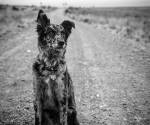 animals, black and white, and country image