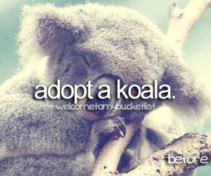 Koala, cute, and love image