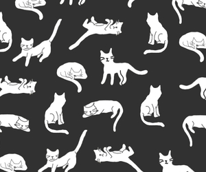 background, cat, and black and white image