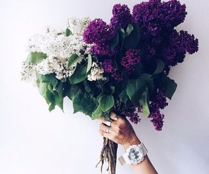 flowers and beauty image