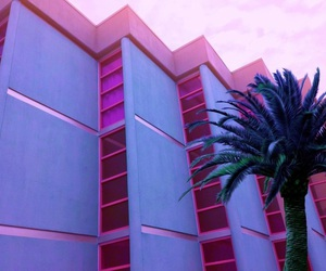 building, palm, and pink image