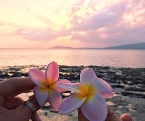 flowers and hawaii image